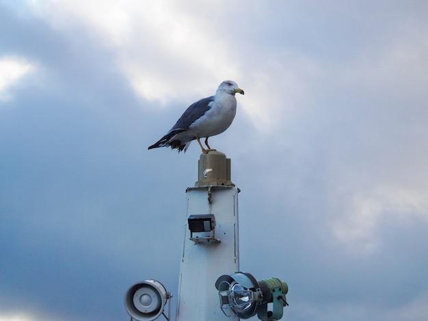 Een zeemeeuw staat op het jacht