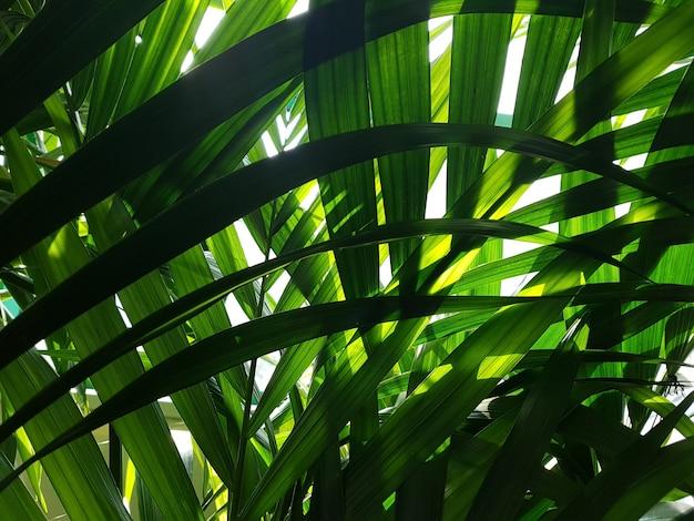 Een zicht op het gebladerte van palmbomen in de jungle waar zonlicht doorheen breekt. concept achtergrond, dieren in het wild, natuur, landschap, tropen.