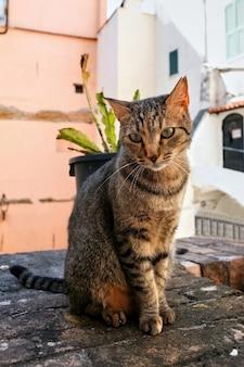 Een zittende kat in sanremo, italië