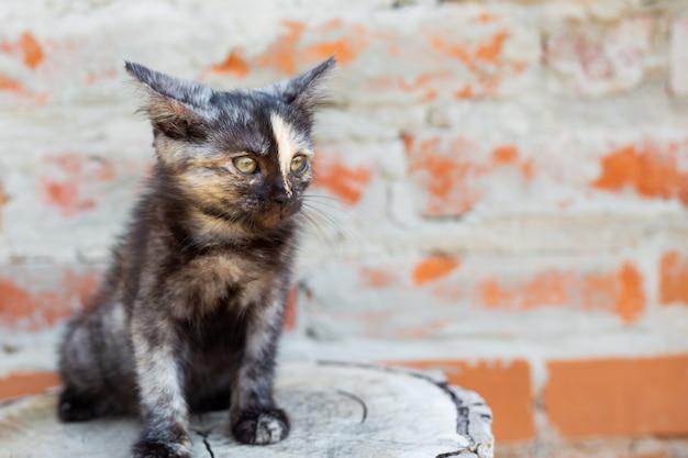 Een zwart katje met een strook op zijn neus drukte zijn oren terwijl hij op een boomstronk zat. favoriete huisdieren. ruimte kopiëren.