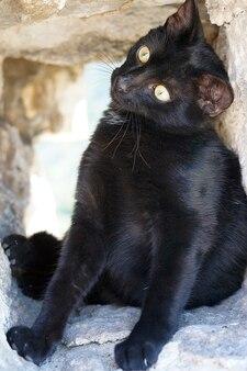 Een zwart katje zit in een stenen nis en draait zijn hoofd naar één kant.