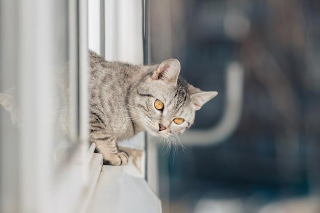 Een zwart-wit gestreepte kat staat met zijn voorpoten aan de rand van het raam en kijkt bij helder zonnig weer de straat op.