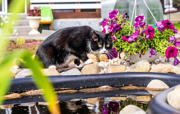 Een zwart-witte kat in de buurt van een vijver.