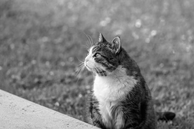 Een zwart-witte kat in een tuin