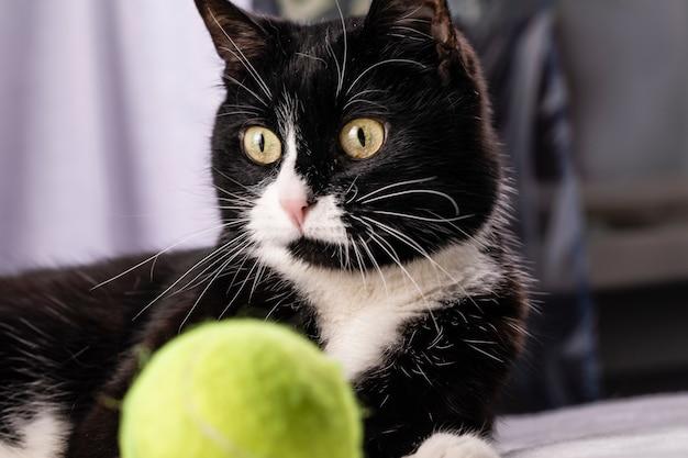 Een zwart-witte kat ligt op het tapijt met een tennisbal