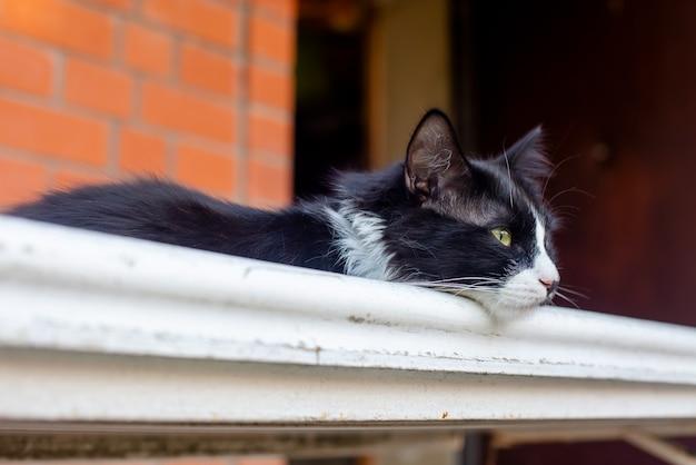 Een zwart-witte kat met een bedachtzame blik ligt op het witte rode bakstenen huis met reling