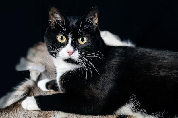 Een zwart-witte kat met een verbaasde blik op een bonttapijt.