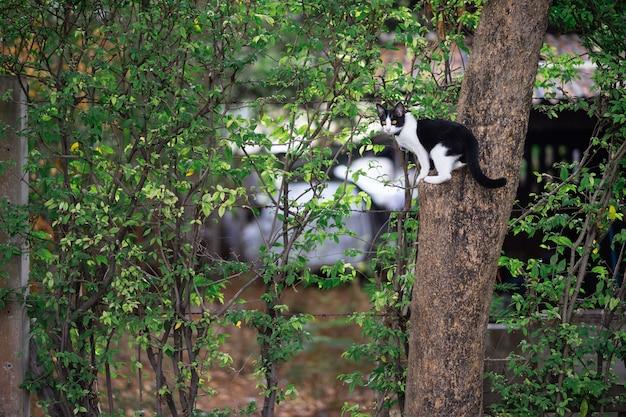 Een zwart-witte kat zit op een boom