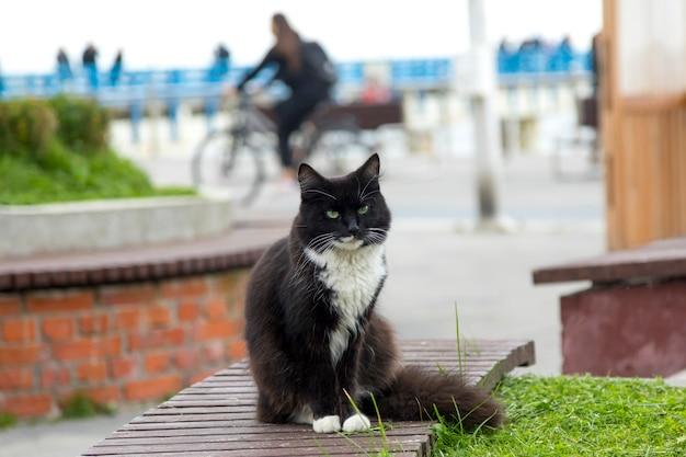 Een zwart-witte pluizige dakloze kat zit op een bank en kijkt direct in de camera.