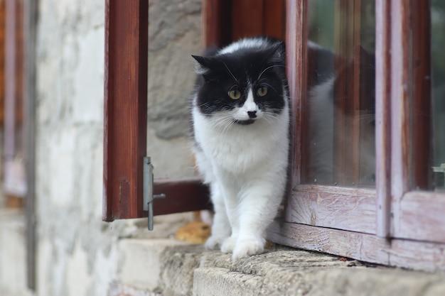 Een zwart-witte pluizige kat staat voor het raam de kat ging op een zonnige dag uit het raam