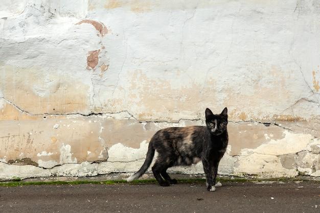 Een zwarte dunne kat. oude armoedige muur op straat