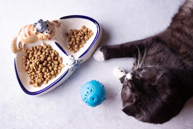 Een zwarte kat ligt in de buurt van een kom met eten
