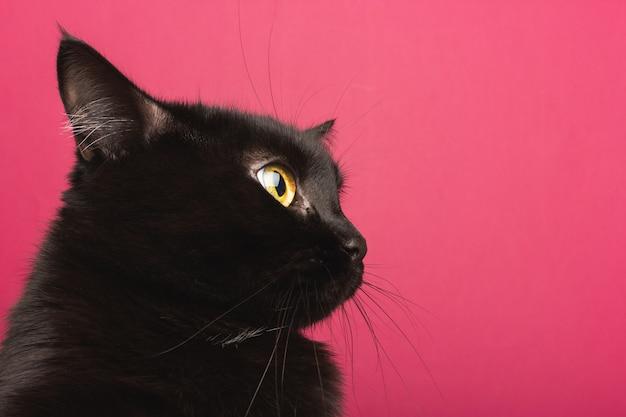 Een zwarte kat zit in profiel en kijkt geschokt rond