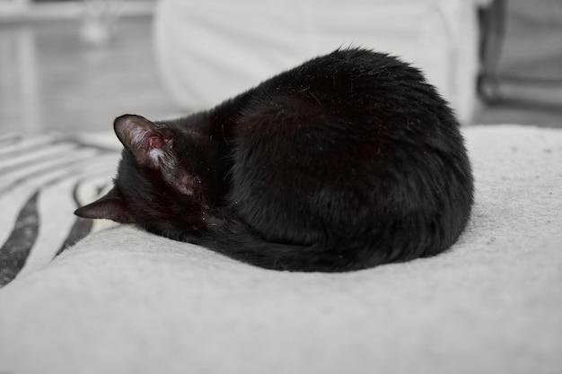 Een zwarte opgerolde pluizige kat die op het zachte bed rust