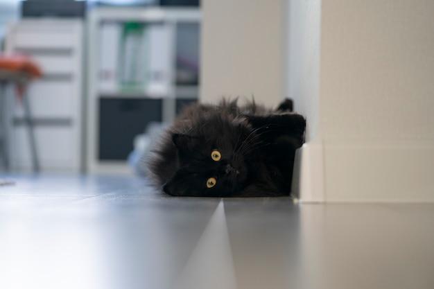 Een zwarte pluizige kat met gele ogen ligt en rust thuis in een grappige pose.