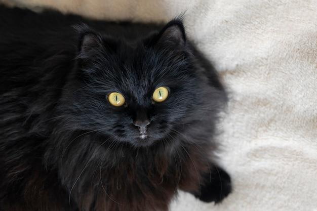 Een zwarte pluizige kat met gele ogen ligt en rust thuis. uitzicht van boven