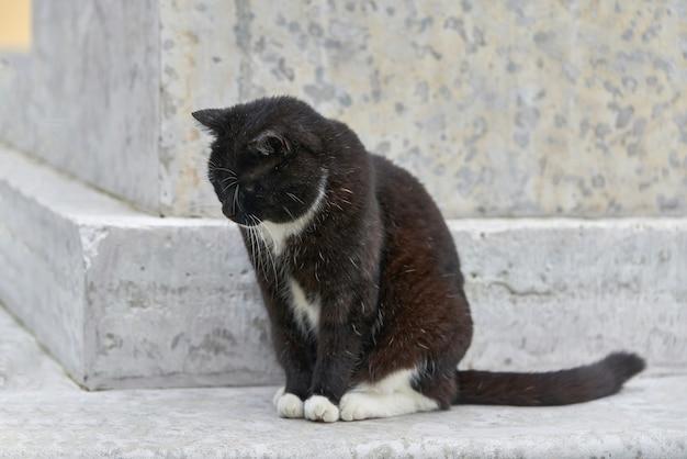 Een zwarte pluizige kat zit op een granieten voetstuk op een zomerdag