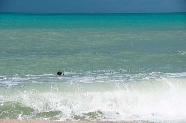 Een zwarte retriever die in het overzees zwemt