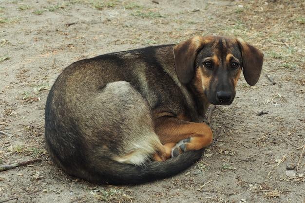 Een zwerfhond, dun en verdrietig, ligt opgerold op de grond.
