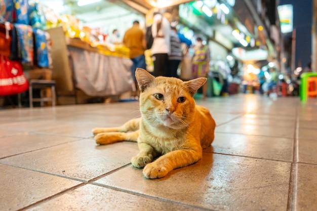 Een zwerfkat die op een straatmarkt leeft