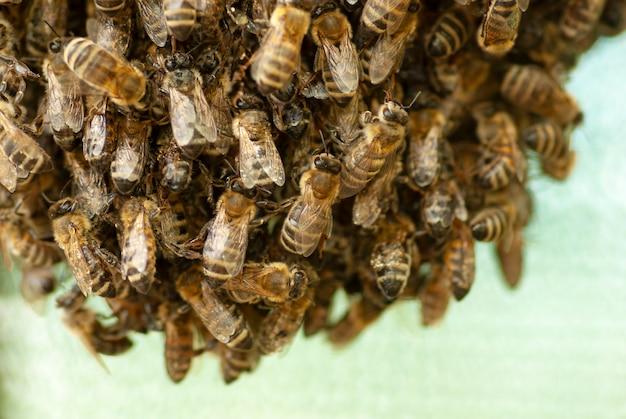 Een zwerm bijen die aan een boom hangt.