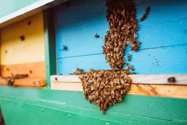 Een zwerm bijen vliegt naar de bijenkorf