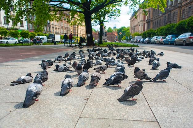 Een zwerm duiven graast in de steeg van de stad