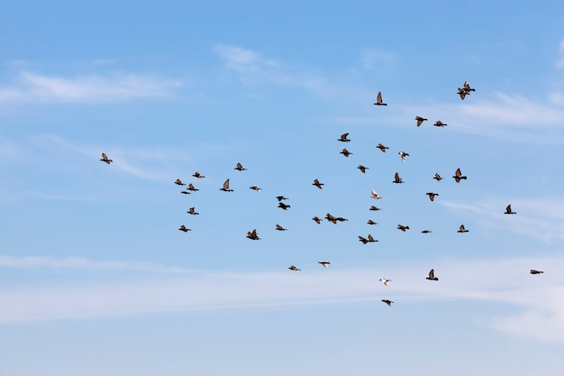Een zwerm duiven vliegt in de blauwe lucht