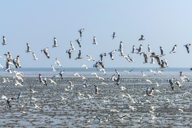 Een zwerm meeuwen vliegt over zee
