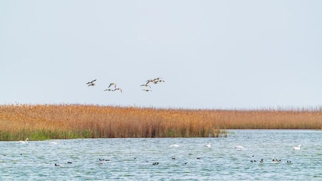 Een zwerm trekvogels over het meer