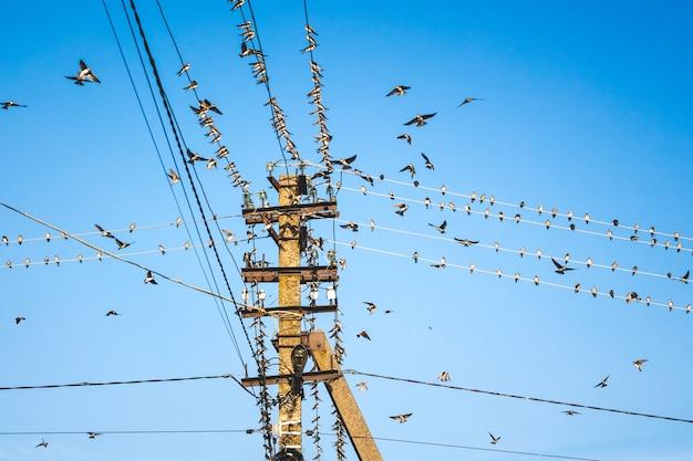 Een zwerm zwaluwen bij een paal met elektrische draden