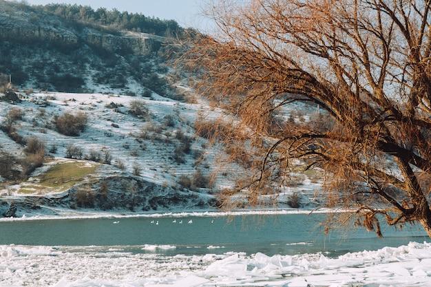 Een zwerm zwanen koestert zich op een rivier op een zonnige dag in de winter