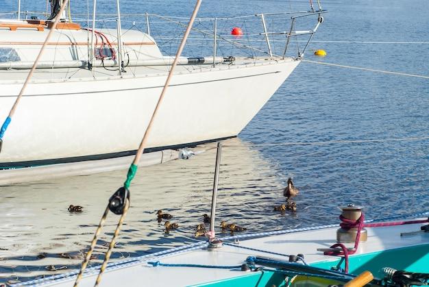 Eend met een kroost eendjes zwemmen tussen afgemeerde schepen in de jachthaven