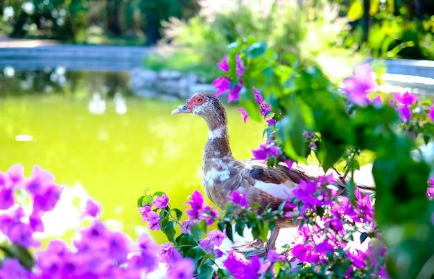 Eend staat op een vijver in bloemen