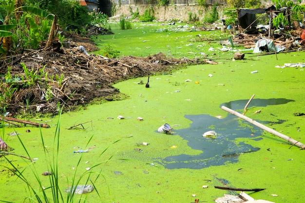 Eendekroos als een indicator van watervervuiling