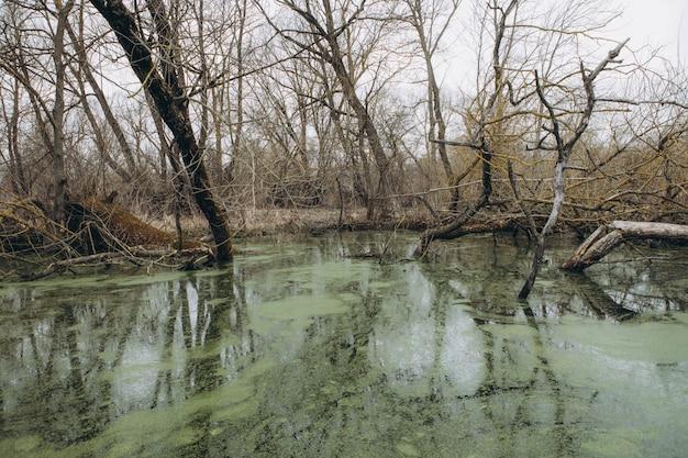 Eendekroos bedekt op het wateroppervlak