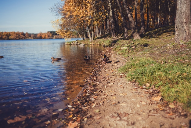 Eenden in het meer