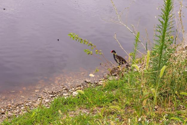 Eenden op de vijver in het park. wilde eenden worden weerspiegeld in het meer. veelkleurige veren van vogels. een vijver met eenden en woerds. eendenvoer op het wateroppervlak. eenden eten voedsel in het water