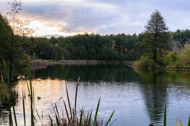 Eenden zwemmen bij zonsopgang in de vroege ochtend op het blue lake in kazan. rusland. de zonsopgang, het riet, het gras, de bomen en het turquoise meer.