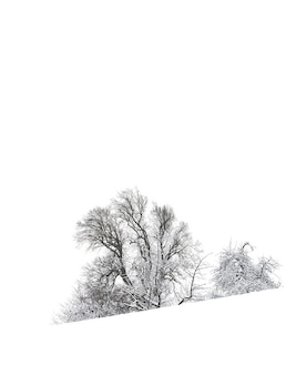 Eenvoud in zwart en wit