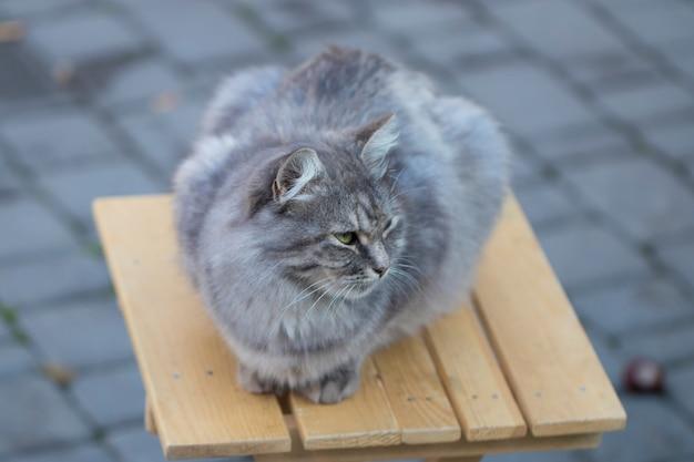 Eenvoudige grijze kat, zittend op een stoel