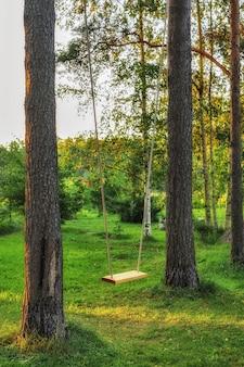 Eenvoudige schommel opgehangen aan bomen
