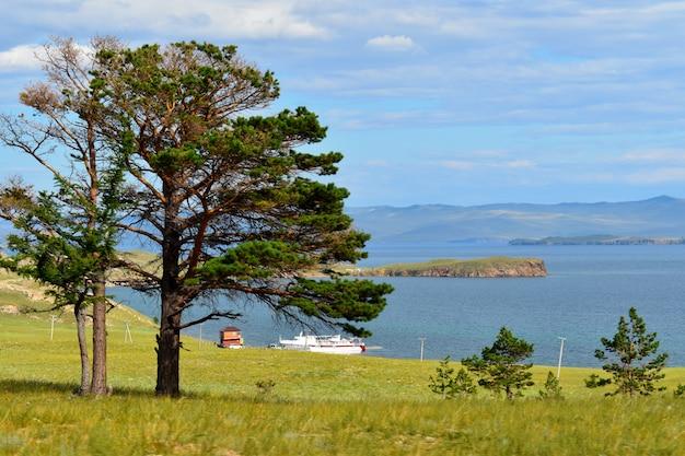 Eenzaam boom- en berglandschap