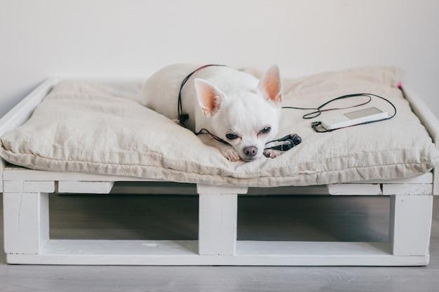 Eenzaam chihuahua puppy liggend op ligstoel met speler en hoofdtelefoons