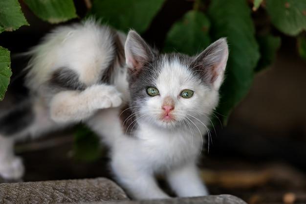 Eenzaam dakloos katje met groene ogen krast oor
