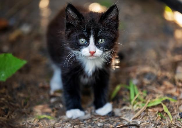 Eenzaam dakloos zwart katje met witte vlekken