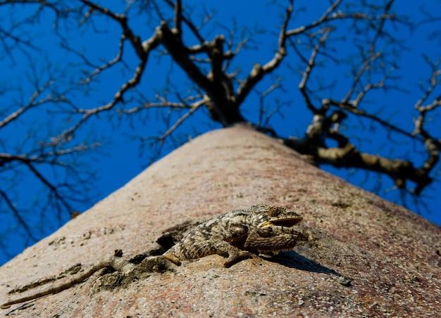 Eenzame baobab op de hemelachtergrond in madagaskar