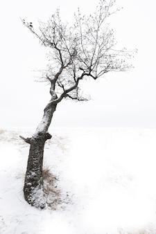 Eenzame boom aan de oever van een besneeuwd meer in de winter in de stijl van minimalisme