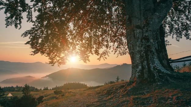 Eenzame boom in de bergen bij zonsondergang