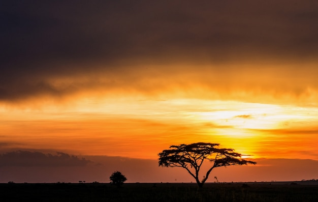 Eenzame boom in de savanne tegen een achtergrond van een prachtige zonsondergang. klassieke afrikaanse zonsondergang. oost afrika.